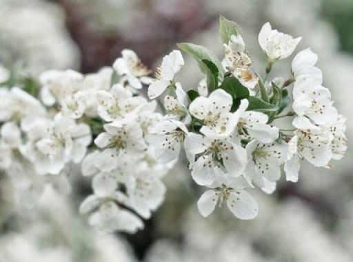 curso-flores-de-bach