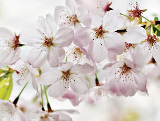 Flores de Bach Charla Gratuita