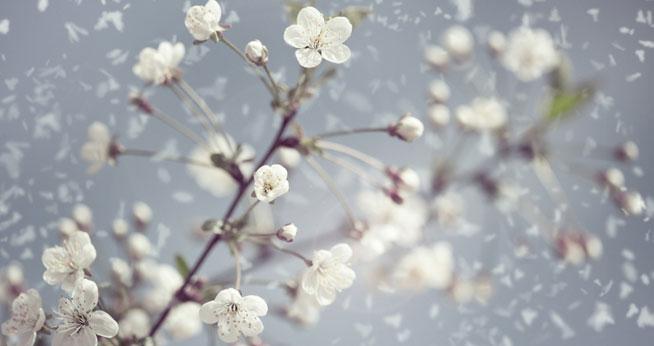 consulta-flores-de-bach